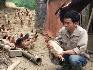 Trở về từ Hàn Quốc, 8X thả bạt ngàn gà trên đồi, bỏ túi 170 triệu