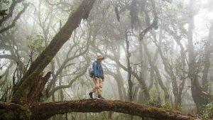 Săn rêu trên đỉnh Tà Xùa