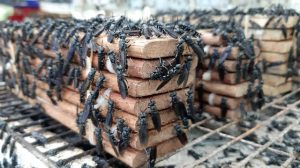 Kỹ sư bỏ việc về quê nuôi ruồi, thu nhập hàng chục triệu đồng mỗi tháng