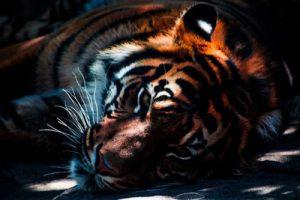 Khám phá những loài động vật khỏe nhất hành tinh
