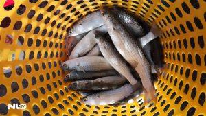 Tuyệt chiêu câu cá đối bằng… chai ở Bình Thuận!