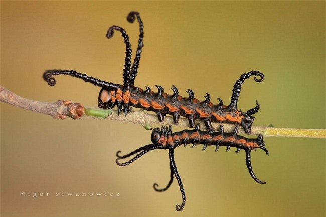 Khám phá vẻ đẹp của 15 loài sâu bướm đẹp nhất thế giới