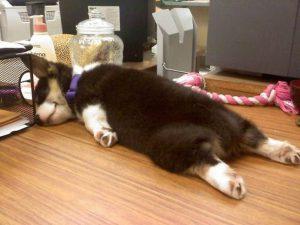 Hài hước với những tư thế ngủ 'khó đỡ' của động vật