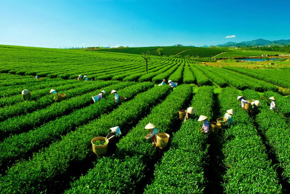 Top 10 địa điểm du lịch hấp dẫn nhất ở Thái Nguyên