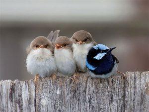 Những hình ảnh đẹp về tình mẫu tử của loài chim