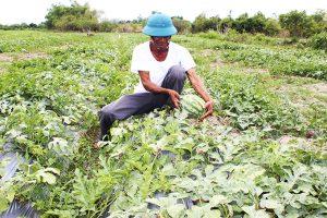 Điều kiện, thủ tục chuyển đổi cơ cấu cây trồng trên đất trồng lúa