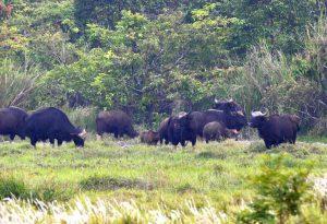 Cần 150 tỉ đồng để di dời 228 hộ dân ra khỏi vùng lõi Khu Bảo tồn thiên nhiên văn hóa Đồng Nai