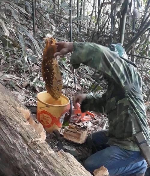 Ngược ngàn săn mật ong, kiếm tiền triệu mỗi ngày