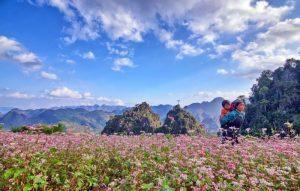 Lạc giữa thiên đường hoa đa sắc Mộc Châu