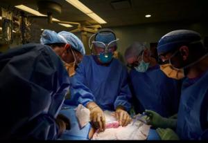 Lần đầu ghép thành công thận lợn cho người, mở ra cơ hội chữa trị