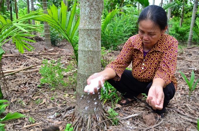 Kỳ lạ loại cây ở Việt Nam 'ăn' một nắm muối, trả một phân vàng