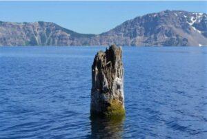 Khúc gỗ bí ẩn trôi thẳng đứng trên mặt hồ Mỹ suốt 120 năm qua