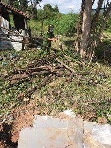 Cư M'gar – Đắk Lắk: Ngang nhiên chặt phá cây trồng trên đất người khác mà không bị chính quyền địa phương xử lý