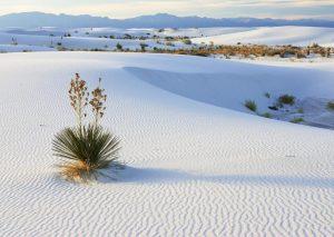 Vẻ đẹp hoang sơ của sa mạc cát lớn nhất Việt Nam