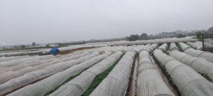 Sản xuất nông nghiệp: kẻ khóc người cười